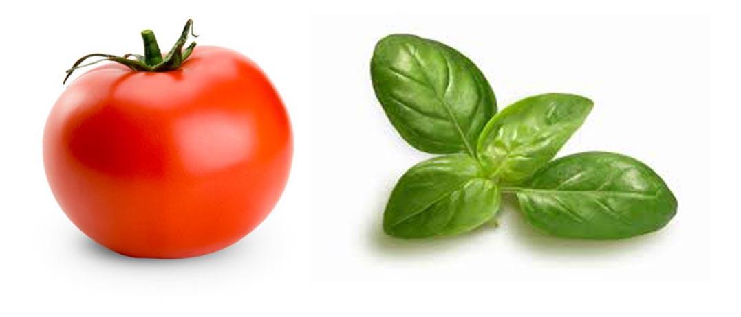 Ντομάτα και βασιλικός